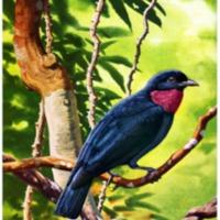 living-bird-10-1971.PNG