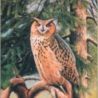 Eurasian Eagle-Owl (<em>Bubo bubo</em>). Painting by Josef Niederlechner, Anton-Mangold-Weg 8, 82362 Weilheim, Germany